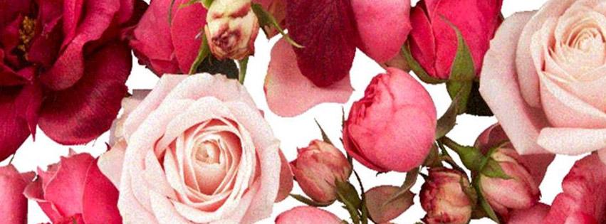 roses-banner-feb-2013
